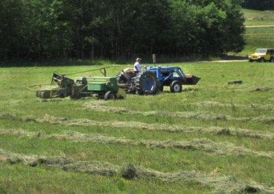 trackgrass
